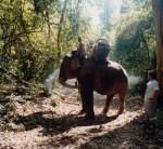 Pwo Karen Elephant