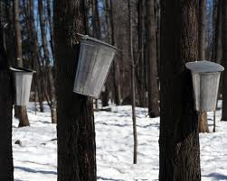 fulton sugar bush